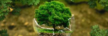 Greenwashing – Der Schein trügt