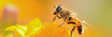 Welt-Bienen-Tag